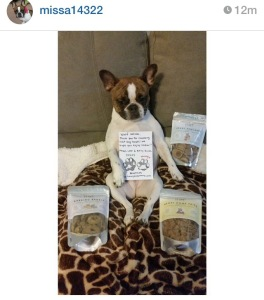 French Bulldog Loves Her Breakfast Buffet Healthy Dog Treats